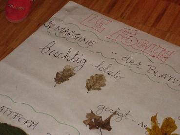 Lo studio delle foglie